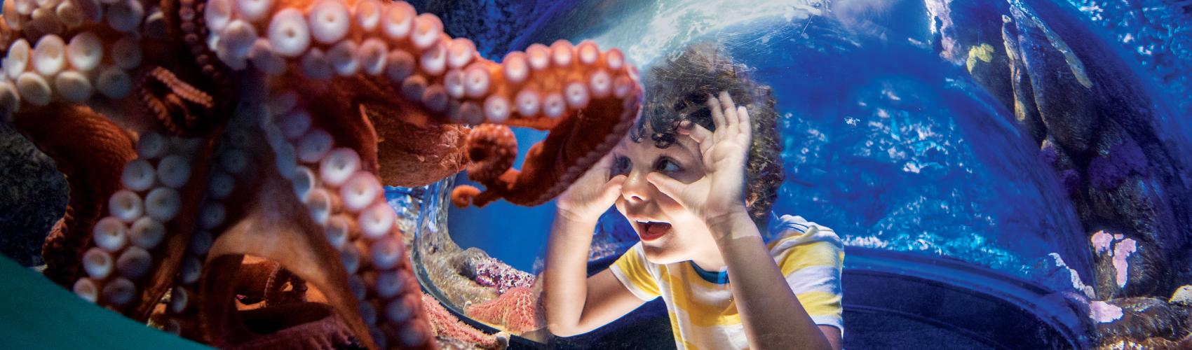 SeaWorld - Dicas de atividades para fazer em casa